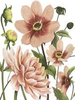 Dahlia Spell II Fine-Art Print