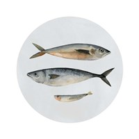 Three Fish I Fine-Art Print