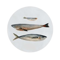 Three Fish II Fine-Art Print