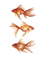 Ornamental Goldfish III Fine-Art Print