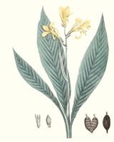Soft Tropical IV Fine-Art Print