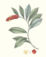 Soft Tropical VI Fine-Art Print