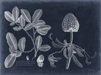 Foliage on Navy II Fine-Art Print