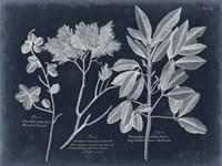 Foliage on Navy VI Fine-Art Print