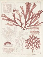 Antique Coral Seaweed IV Fine-Art Print