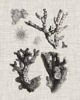 Coral Specimen I Framed Print