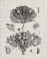 Coral Specimen III Framed Print