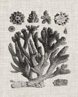 Coral Specimen IV Framed Print