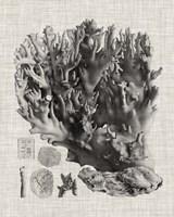 Coral Specimen V Framed Print