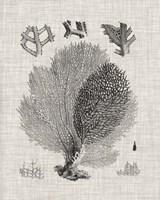 Coral Specimen VI Framed Print