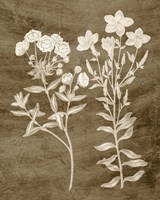 Botanical in Taupe I Fine-Art Print