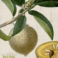 Cropped Turpin Tropicals V Fine-Art Print