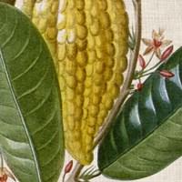 Cropped Turpin Tropicals VI Fine-Art Print