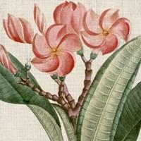 Cropped Turpin Tropicals VII Fine-Art Print