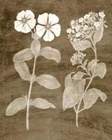 Botanical in Taupe IV Fine-Art Print