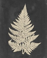 Linen Fern I Fine-Art Print