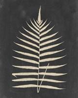 Linen Fern III Fine-Art Print