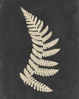 Linen Fern IV Fine-Art Print