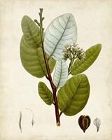 Verdant Foliage I Fine-Art Print
