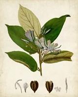 Verdant Foliage IV Fine-Art Print