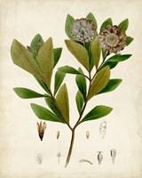 Verdant Foliage V Fine-Art Print