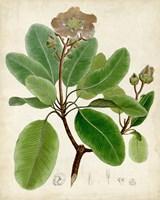 Verdant Foliage VI Fine-Art Print