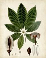 Verdant Foliage VII Fine-Art Print