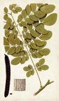 Leaf Varieties I Fine-Art Print