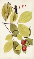 Leaf Varieties II Fine-Art Print