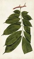 Leaf Varieties III Fine-Art Print