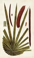 Leaf Varieties VI Fine-Art Print