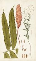 Leaf Varieties VII Fine-Art Print