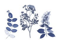 Indigo Pressed Florals I Fine-Art Print
