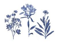 Indigo Pressed Florals II Fine-Art Print