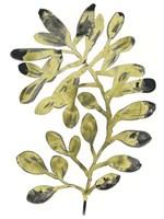 Foliage Fossil II Fine-Art Print
