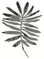 Foliage Fossil VII Fine-Art Print