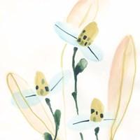 Garden Essence VII Fine-Art Print