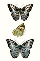 Butterfly Specimen I Fine-Art Print