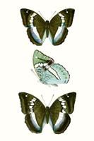 Butterfly Specimen II Fine-Art Print