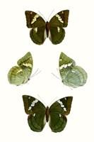 Butterfly Specimen V Fine-Art Print