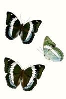 Butterfly Specimen VIII Fine-Art Print