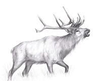 Wildlife Trail II Fine-Art Print