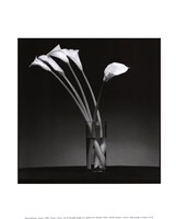 Arums 1990 Fine-Art Print