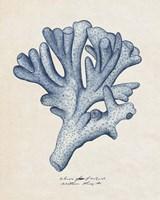 Sea Coral Study I Fine-Art Print