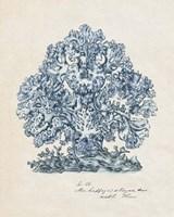 Sea Coral Study II Fine-Art Print