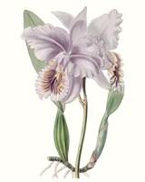 Lavender Beauties II Fine-Art Print