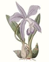 Lavender Beauties IV Fine-Art Print