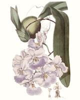 Lavender Beauties V Fine-Art Print