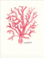 C is for Coral Fine-Art Print