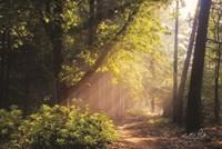Sunny Trail Fine-Art Print